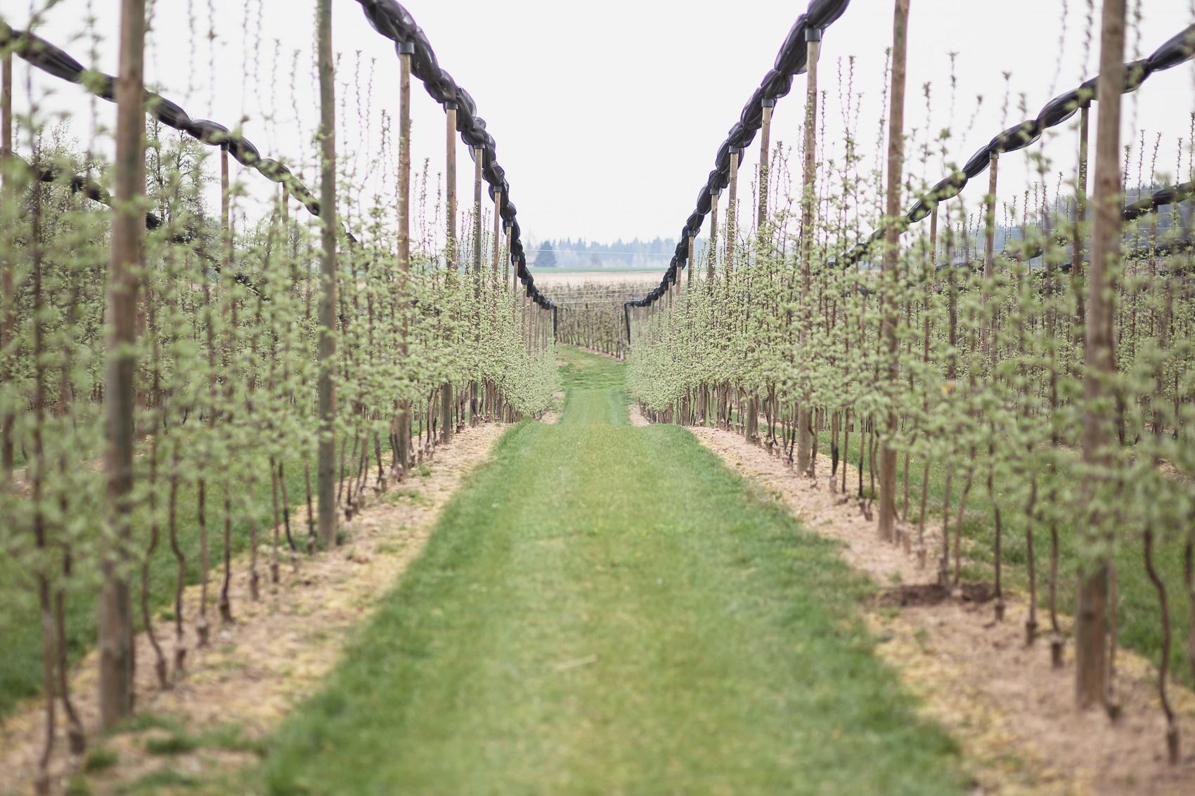 Apfelhof Bäumesetzen